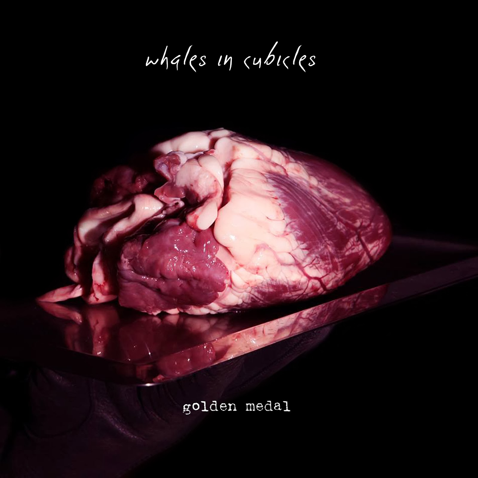 Whales In Cubicles release free download 'Golden Medal'