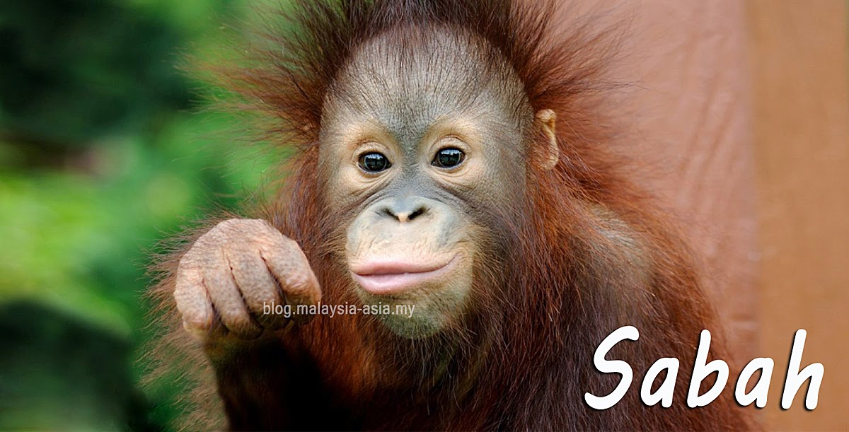 Orangutan Photo 2015