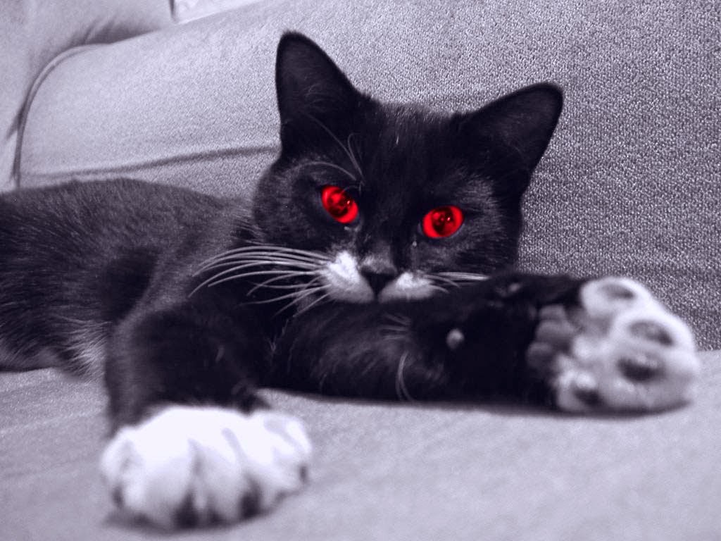 Red Black Eye Cat from hell