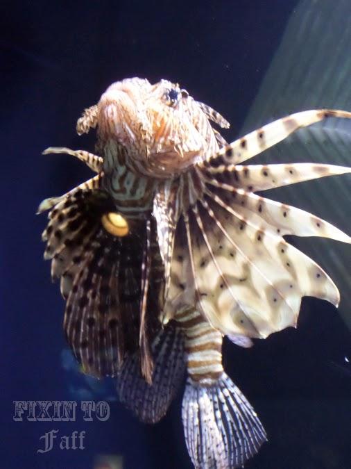 Cameron Park Zoo Lionfish