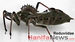 1. Wheel Bug