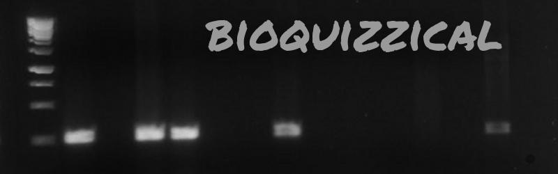 Bioquizzical