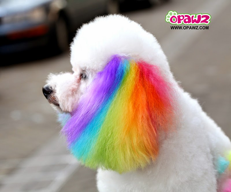 Pets Lover: Is It Safe To Dye Your Dog?
