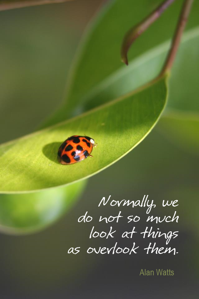 visual quote - image quotation for AWARENESS - Normally, we do not so much look at things as overlook them. - Alan Watts