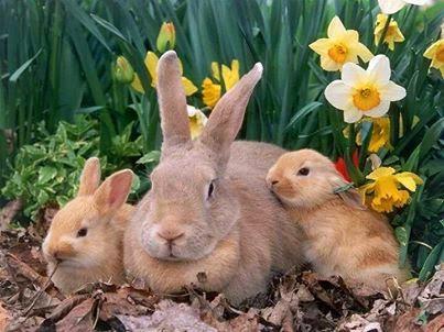 Frohe Ostern Osterbilder