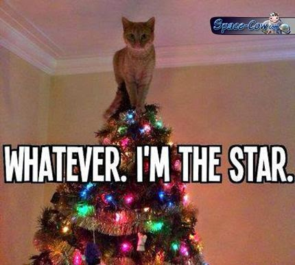funny cat picture humor