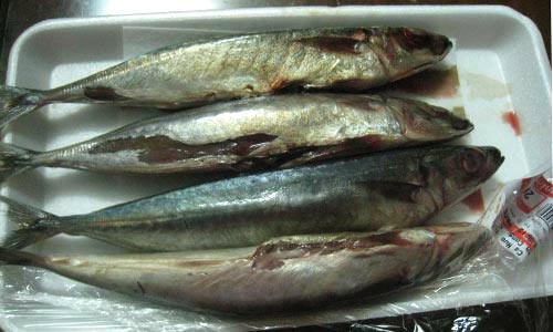 ca bien tuoi - ươn thối tại siêu thị Unimart