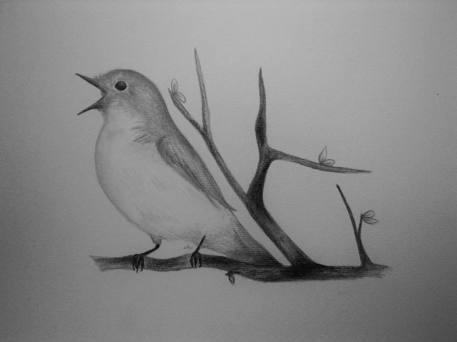 Pencil Sketching Birds
