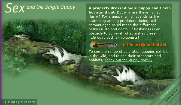 Sex and the single guppy pics 64