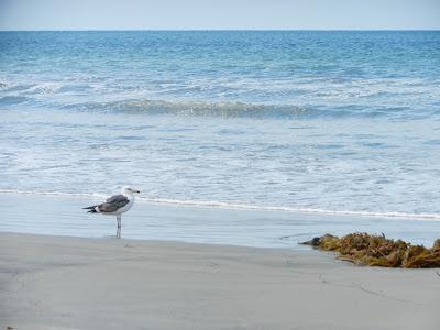 coronado beach picture