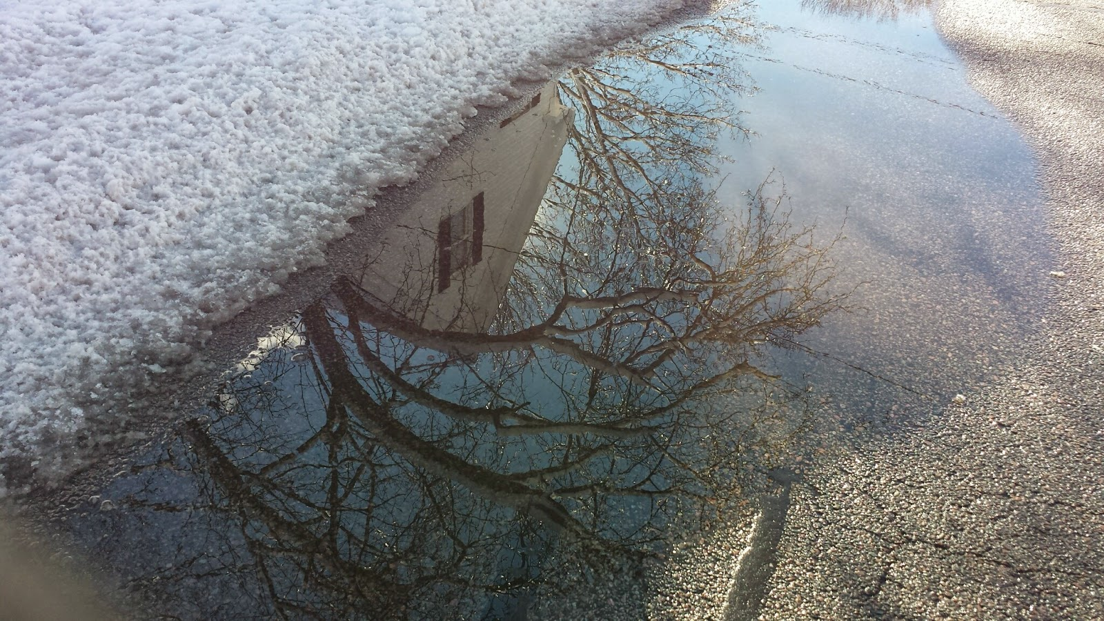 biggest puddle and best reflection on the walk