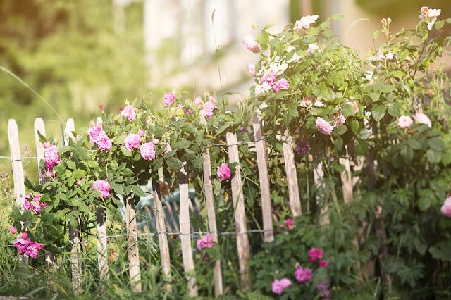 Goda Grannar - Blommig Fredag!
