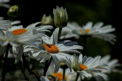 flori margarete