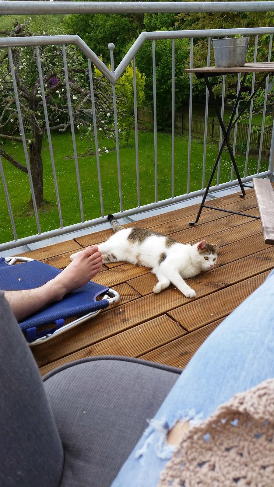 gestatten mein name ist haley von brettern auf dem balkon katzen auf b umen leichen im. Black Bedroom Furniture Sets. Home Design Ideas