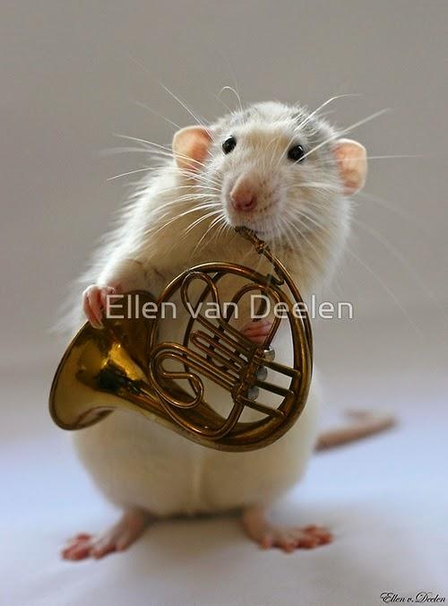 06-French-Horn-Player-Musical-Dumbo-Rat-Ellen-Van-Deelen-www-designstack-co