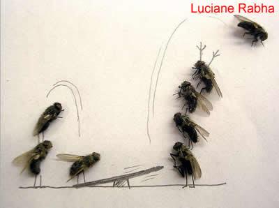 Tuca Jordão e as moscas