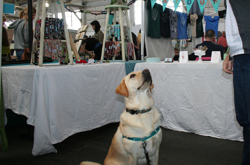 cabana sitting and looking up at a treat held high above, she is in the middle of a craft booth surrounded by tables covered with tablecloths and handmade wares