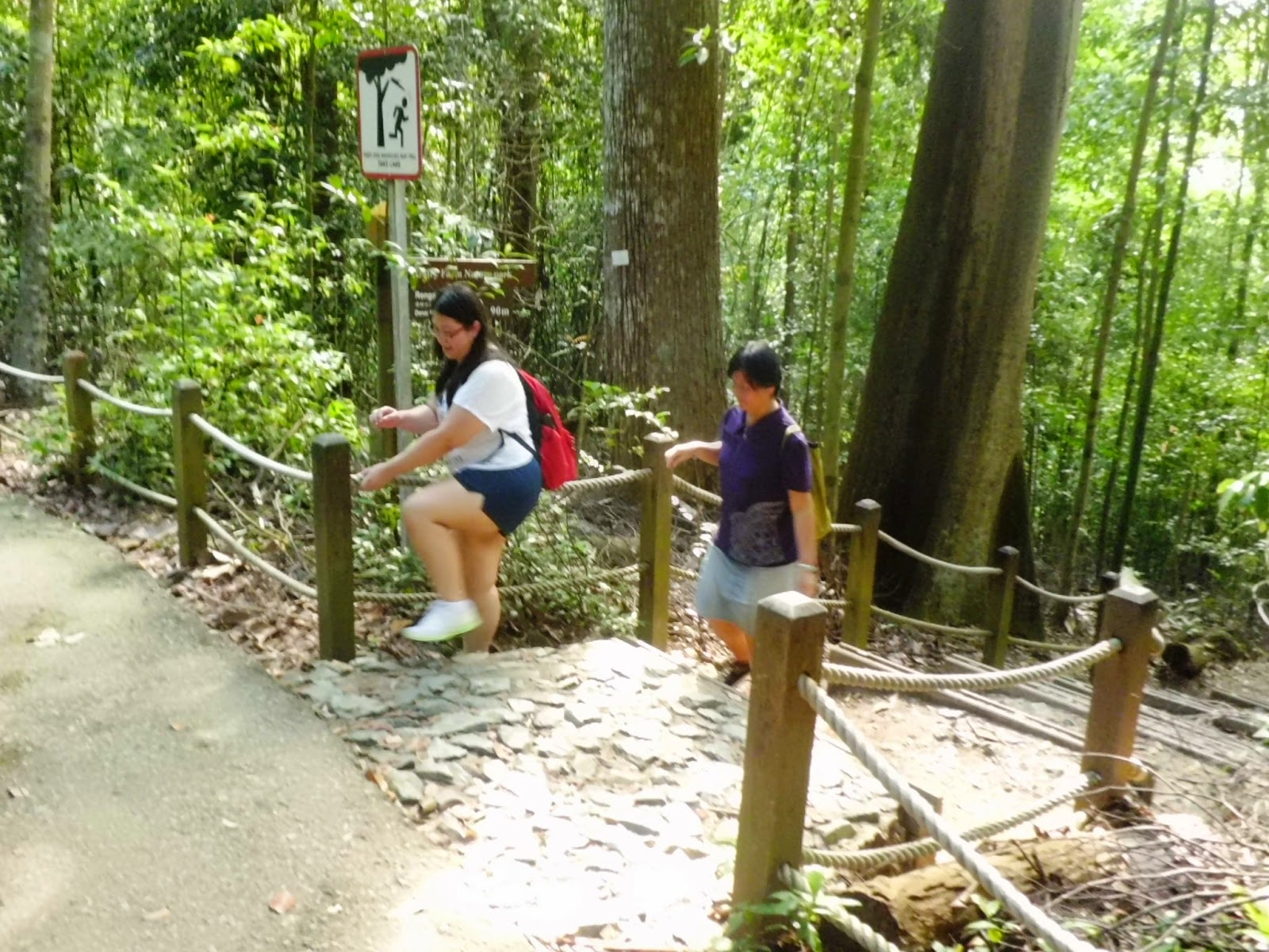 Climbing to Bukit Timah Nature Reserve's summit (163.63 m) from Dairy farm route