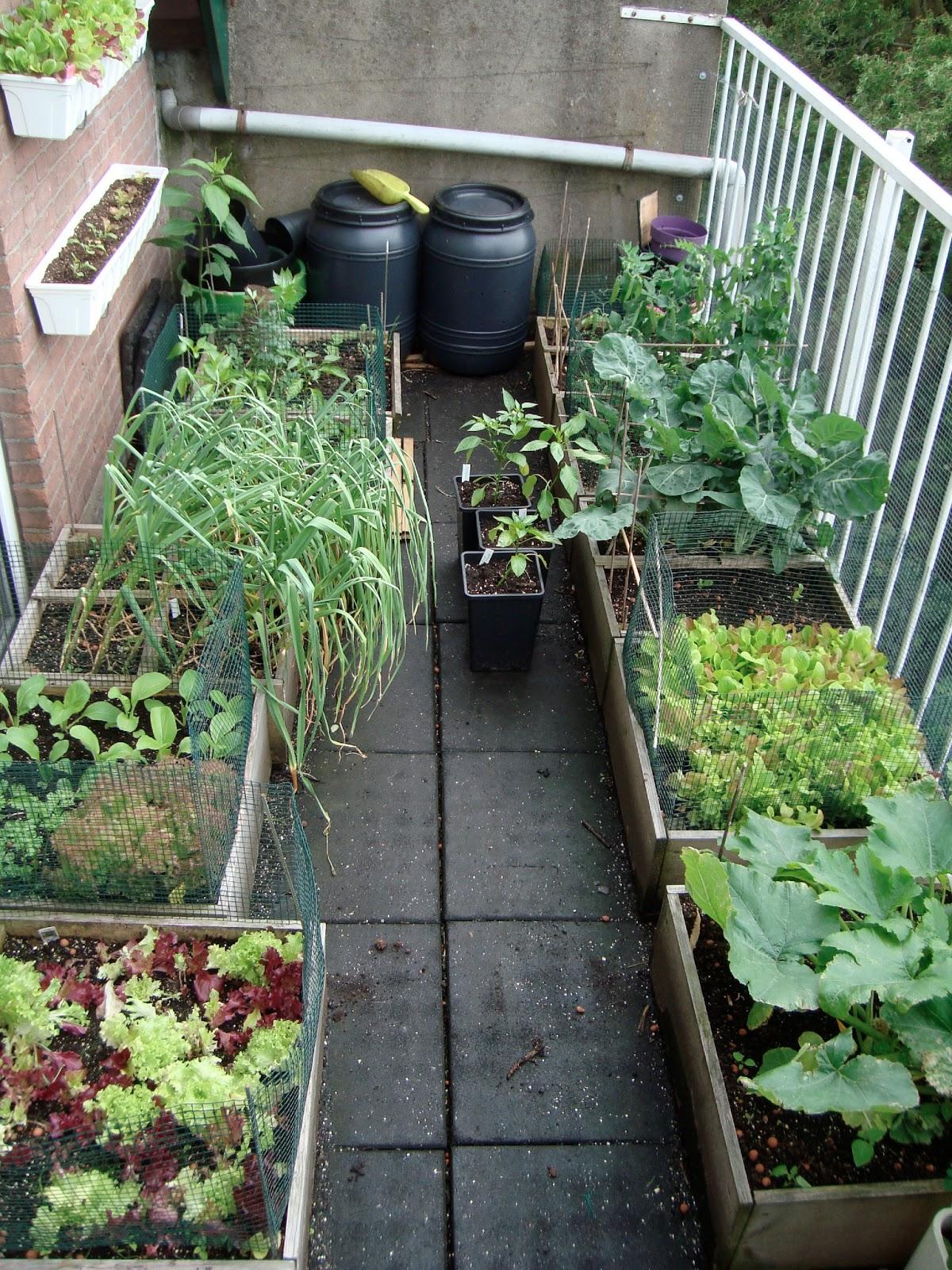 Minituinders een dozijn soorten groenten op n balkon - Groenten in potten op balkons ...