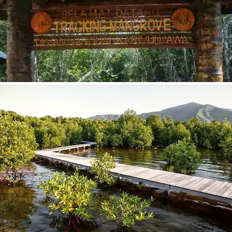 Traking Hutan Mangrove Karimun Jawa