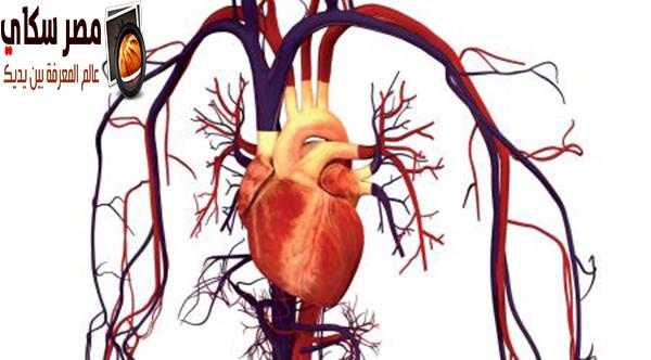 تعرف على مكونات  الأوعية الدموية  Blood vessels