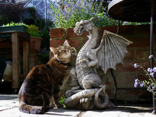 cat-and-dragon-kitten-kitty-pic-picture-