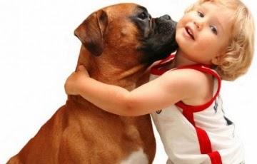 Comunicación no verbal con tus mascotas