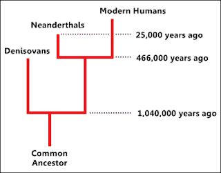 denisovan phylogenetic tree