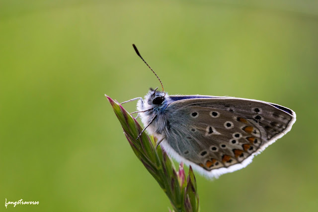Nature & Butterfly in Haute-Savoie