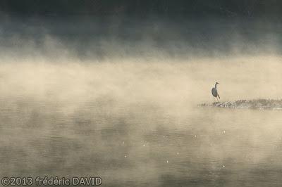 oiseau cormorant héron cendré silhouette étang nature Sorques Fontainebleau Seine et Marne