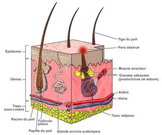 Lacné les hormones lendocrinologue
