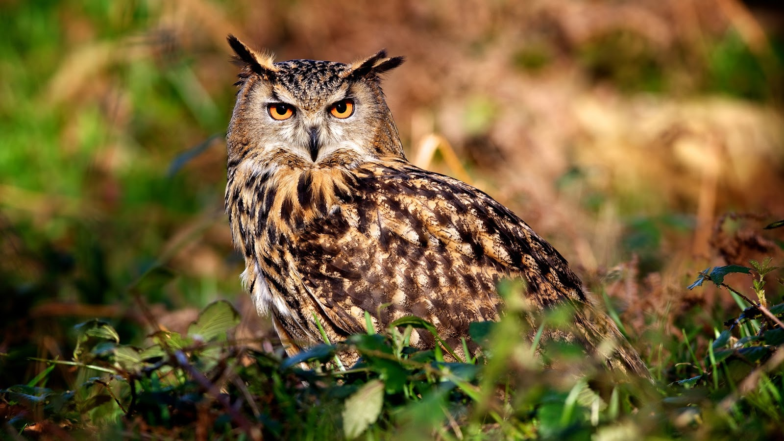 Beautiful   Wallpaper Home Screen Owl - Owl-s-eyes-nature-summer_1080  Collection_909126.jpg