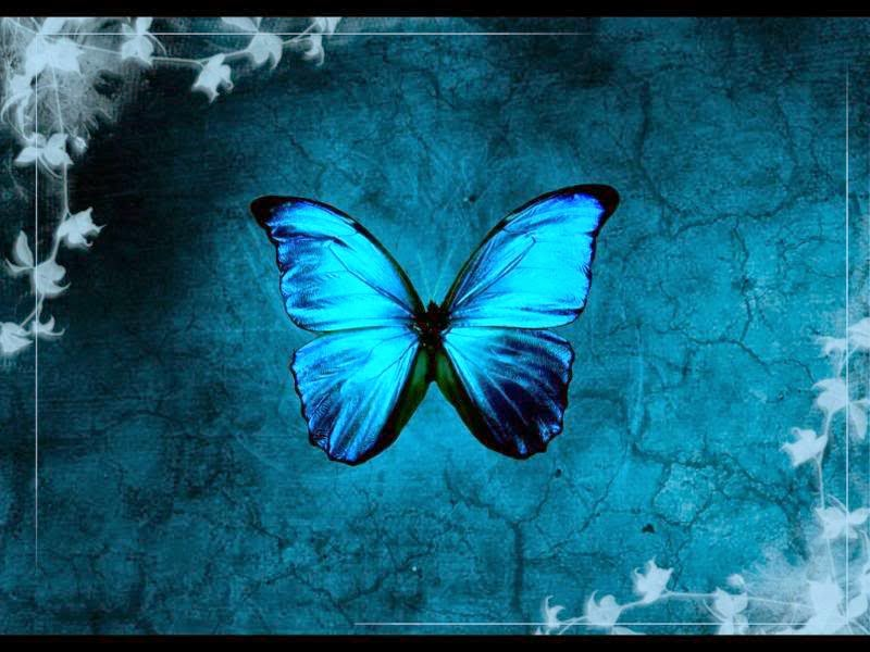 Cool Blue Butterfly Photos