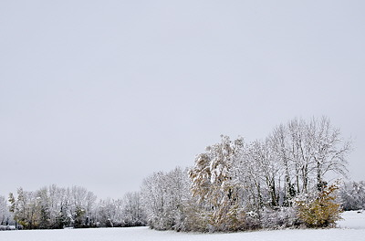 autumn landscape in the snow and mist