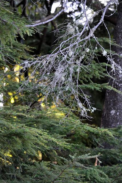 photo of evergreen trees by Nancy Zavada