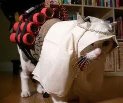 Gambar kucing lucu dan unik Imut imut Terbaru 2013