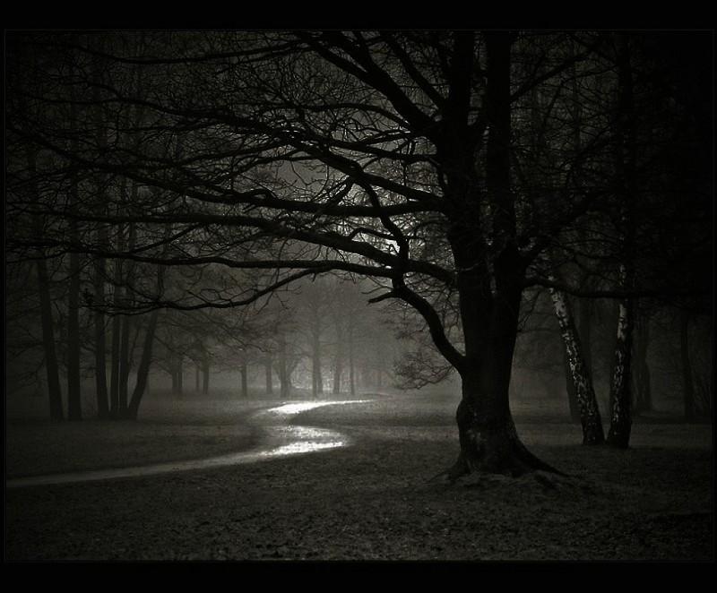 dark-forest-night-nature-31000.jpg