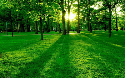 Green Nature Sunrise Wallpaper