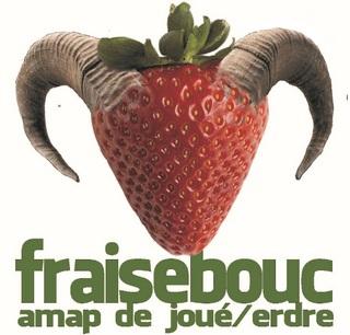 AMAP Fraise-bouc