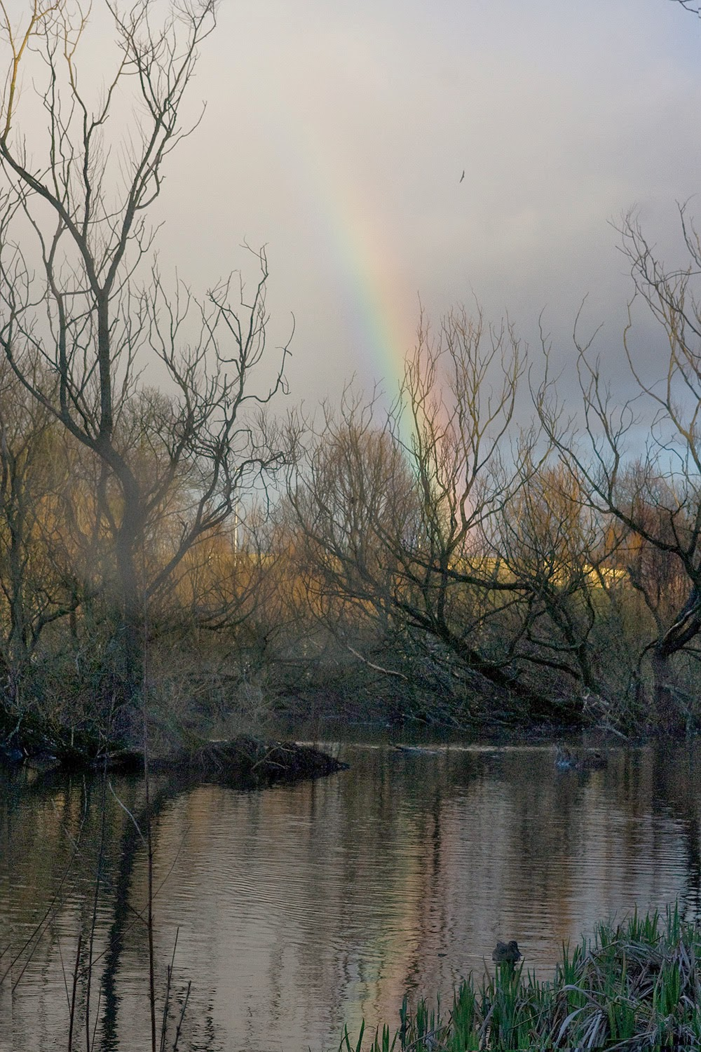 Rainbow reflected in pond
