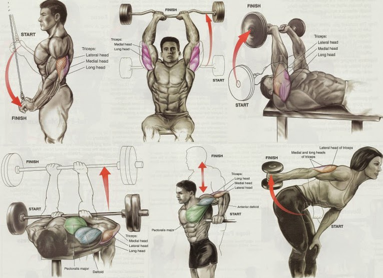 Triceps workout muscle day