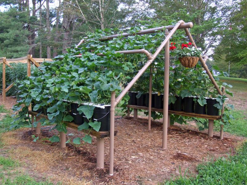 growing concord grapes building a garden trellis using detailed