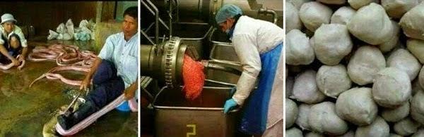 Awas Bebola Daging Ular