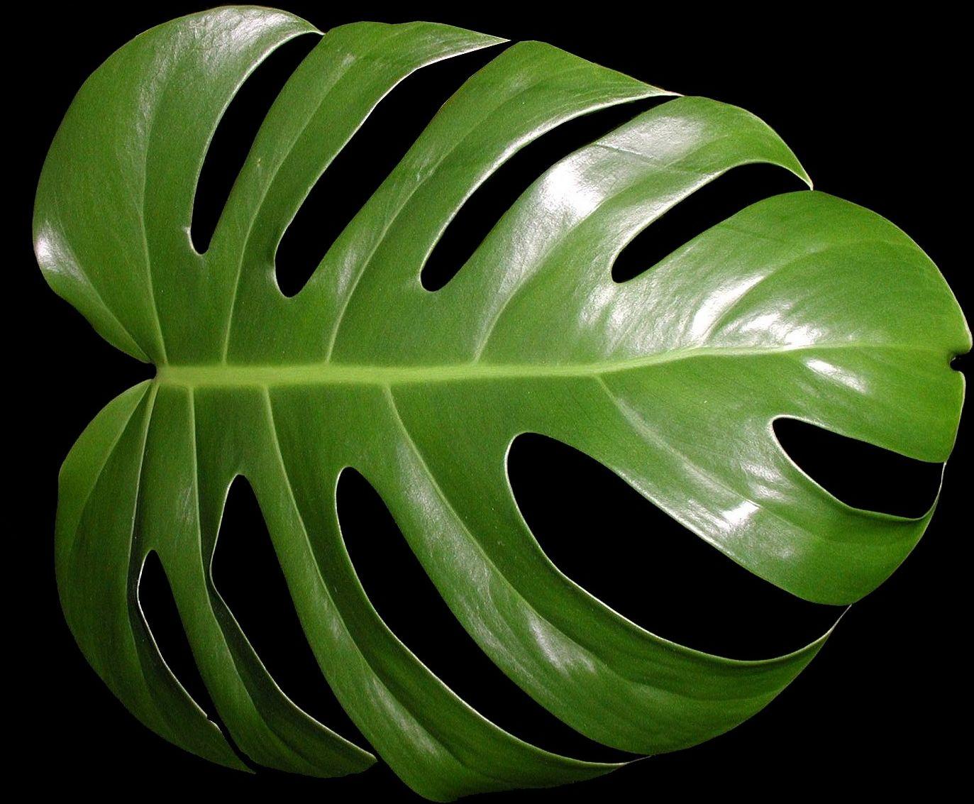 R alisations manuelles de v ro art floral pr paration for Plantes tropicales d interieur