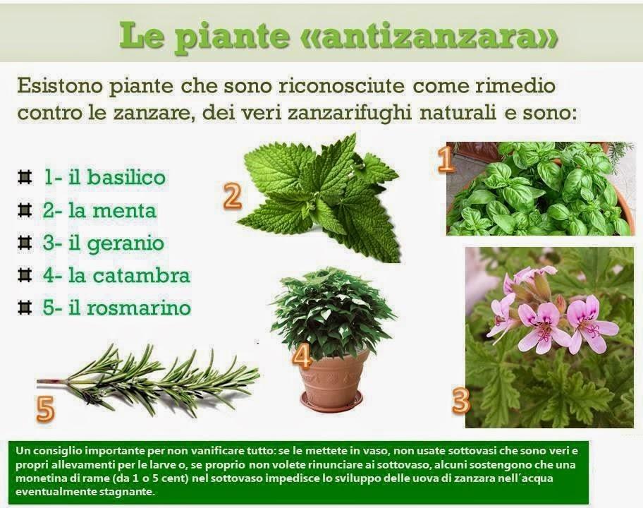 Amicomario come difenderci in modo naturale in casa e - Rimedi contro le zanzare in giardino ...
