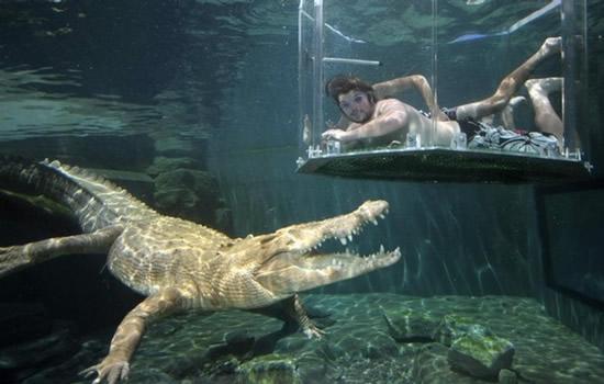 Darwin Australia  City pictures : Curiosidades del Mundo: Parque Crocosaurus Cove en Darwin, Australia.