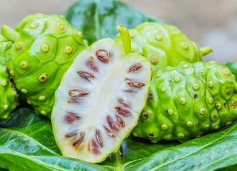 Mengkudu ( Morinda citrifolia ) Buah Yang Kaya Akan Manfaat Untuk Kesehatan