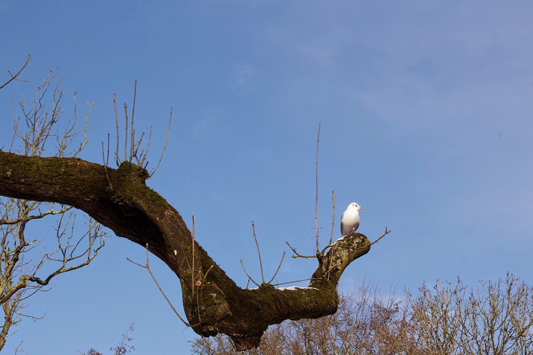 seagull on a branch