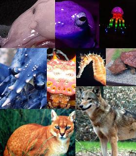 Gambar jenis hewan langka.JPG