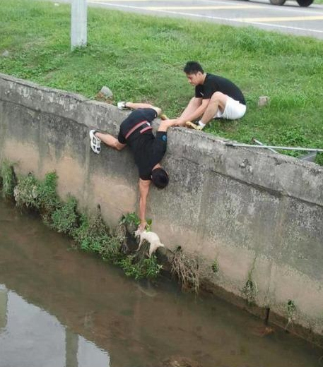 26 Moments That Will Restore Your Faith In Humanity Again - These bros worked together to save a cat